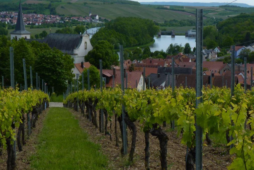 Wipfeld-Weinlage Zehntgraf